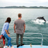 Bay Of Islands, Dolphin Cruise
